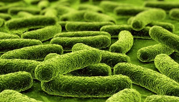 Apa Beda Probiotik dengan Prebiotik dan dengan Antibiotik?
