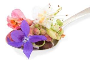 Terapi Bunga Bach Flower