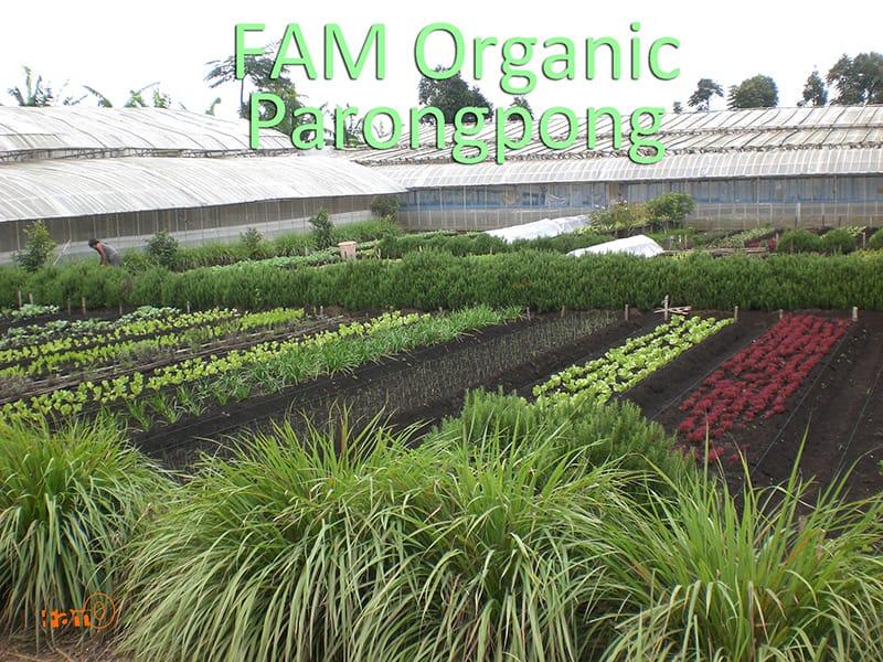 FAM Organic Parongpong