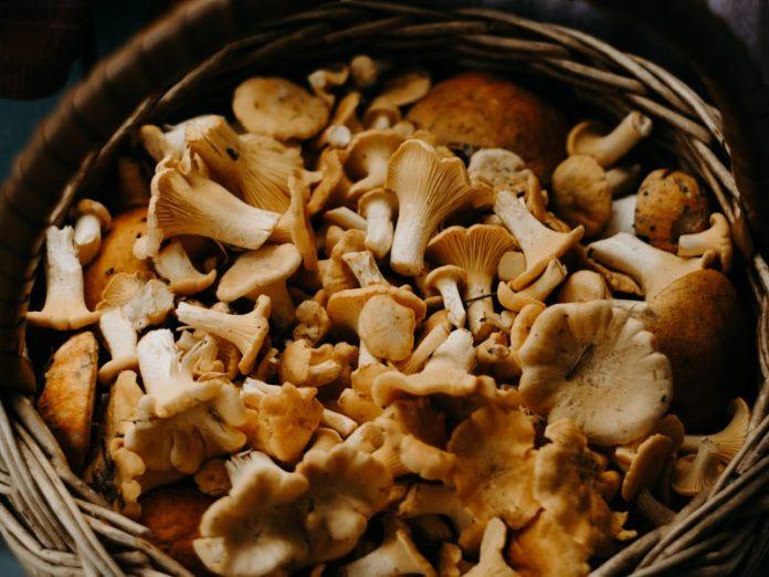 jamur tidak boleh digoreng
