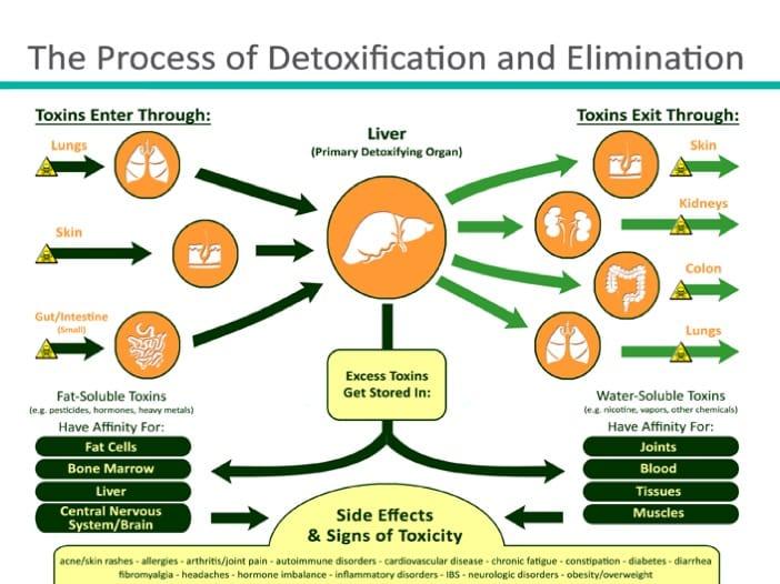 proses detox