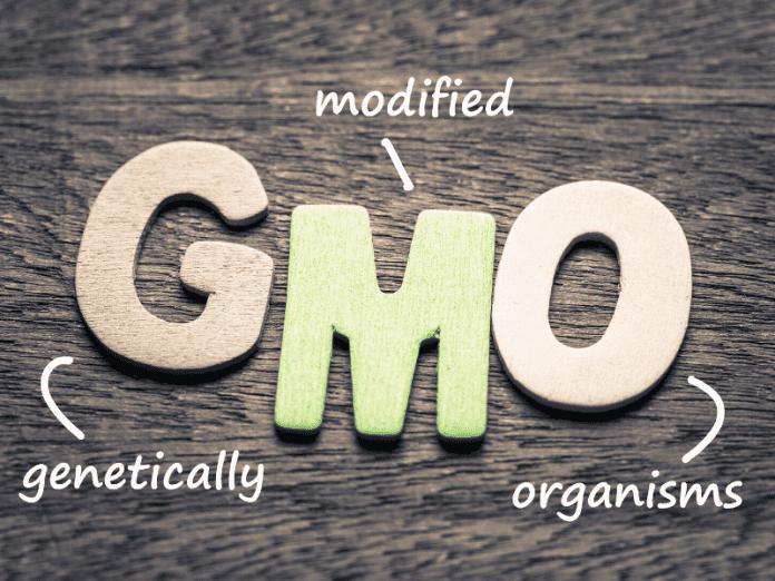 Makanan GMO