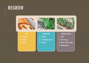 cara regrow makanan