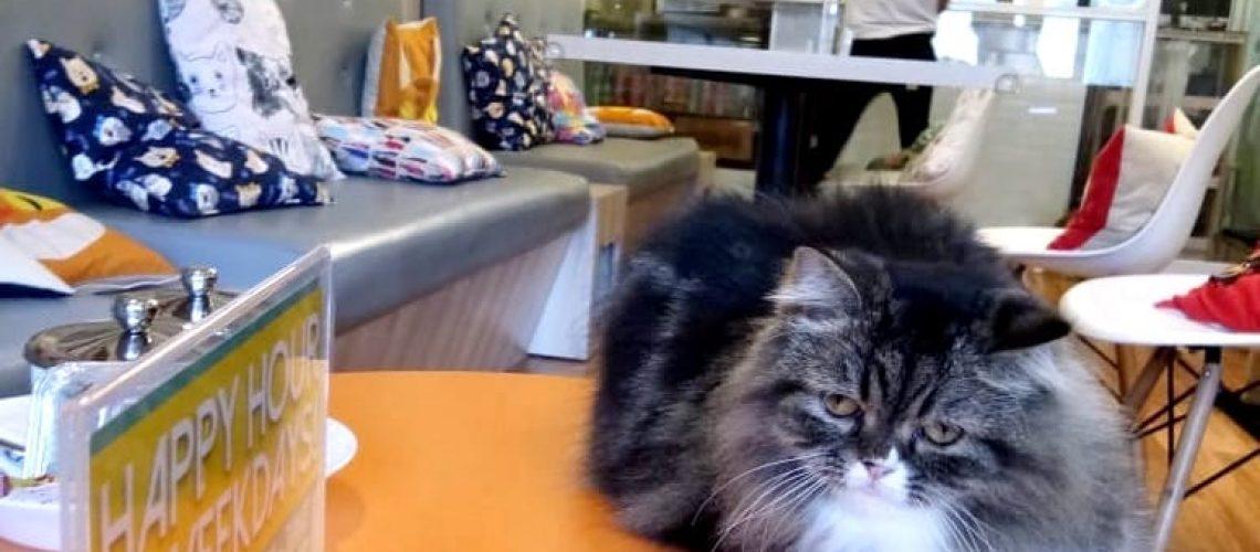 Redakan Stres Bermain Bersama Kucing di Kopi Cat